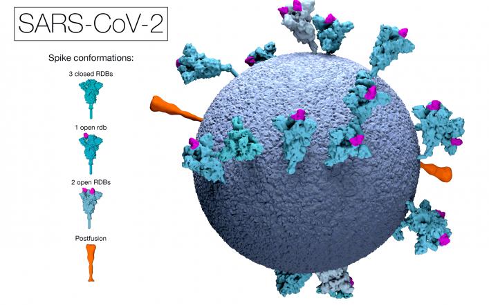Le domande più eclatanti dei dubbiosi sul vaccino anticovid